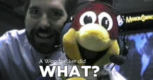 A Woodpecker did WHAT