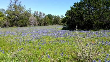 Willow Loop - bluebonnet field (3)