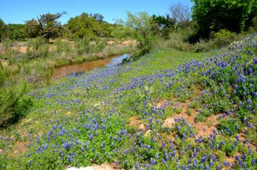 Willow Loop stream bluebonnets (1)