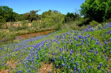 Willow Loop stream bluebonnets (2)