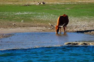 longhorn-reflections-2-