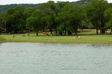 longhorns-in-the-cove-2-