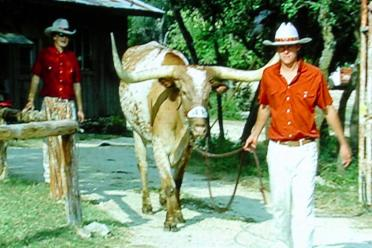 Bevo heads for the stadium