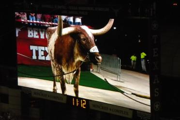 Bevo is not amused at our lack of offense